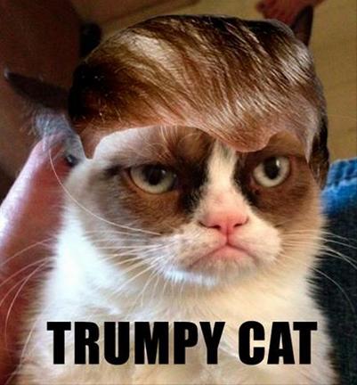 trumpyourcat